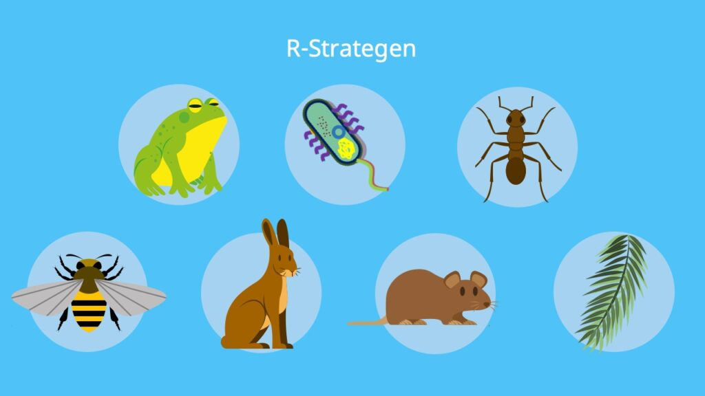 R Strategie, R Strategen Beispiele