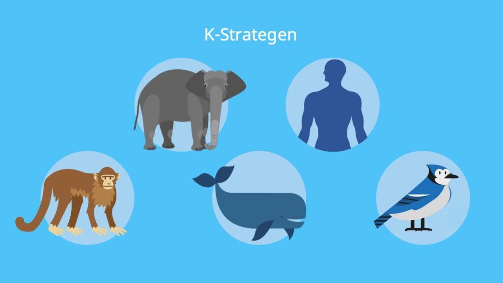 K Strategie, K Strategen Beispiele