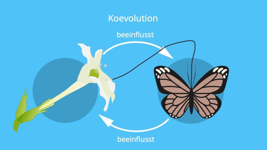 Koevolution, Selektionsdruck, koevolutionäres Wettrüsten, Stern von Madagaskar, Evolution, Beispiel