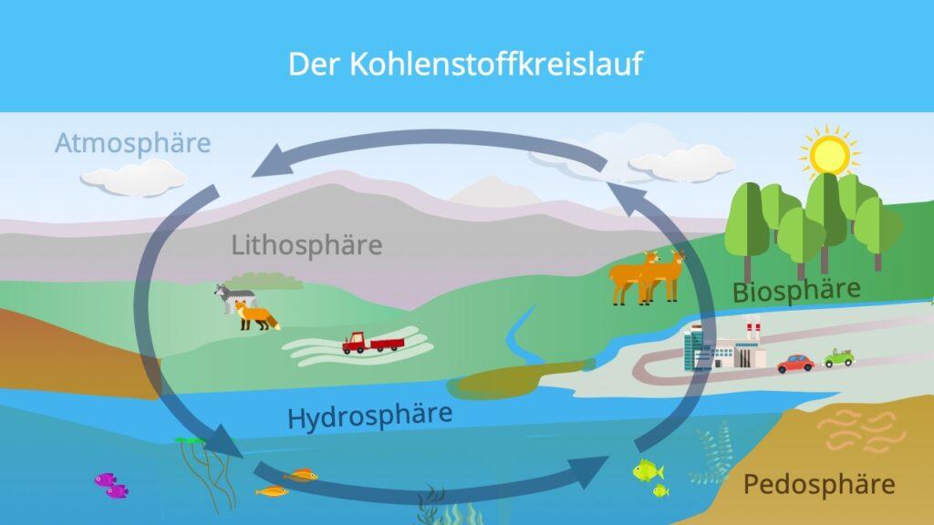 biologischer Kohlenstoffkreislauf, CO2 Kreislauf, Kohlenstoffkreislauf Meer, Kohlenstoffkreislauf See, Kohlenstoffkreislauf Wald, Kohlenstoffzyklus