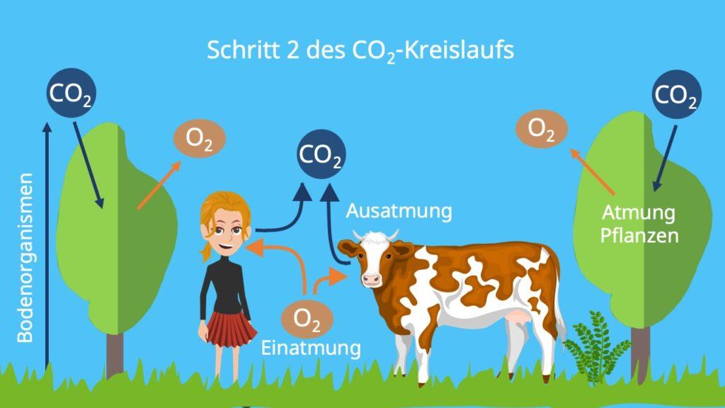 Kohlenstoffzyklus, Kreislauf Pfeile, Kohlenstoffspeicher, Kohlenstoffkreislauf, Kohlenstoffkreislauf Ökologie, Kohlenstoffkreislauf Biologie