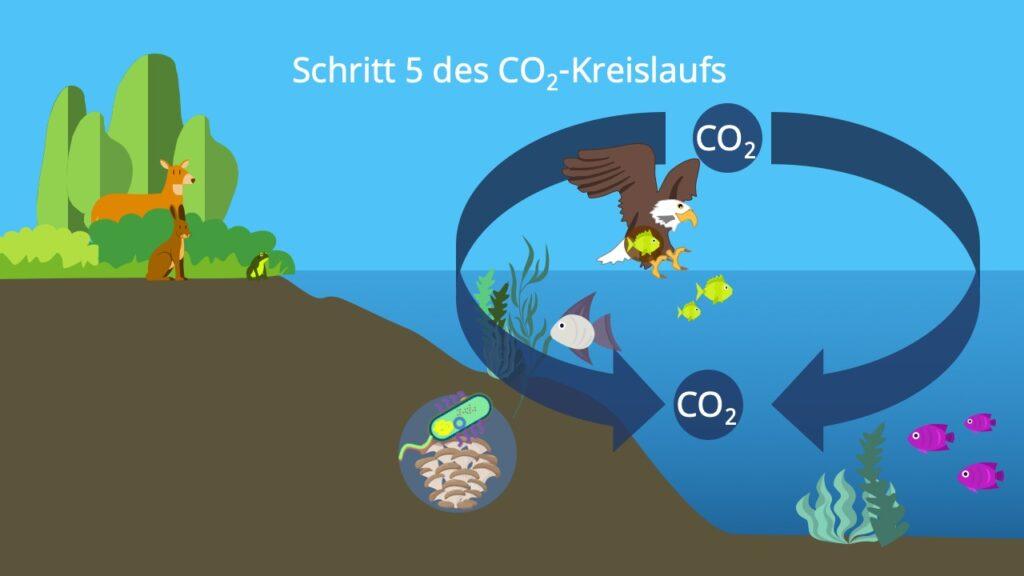 Stoffkreislauf, Kohlenstoffatom, Kohlenstoffzyklus, Kohlenstoffkreislauf, die Atmosphäre, Biosphäre, Kohlenstoffdioxidkreislauf, Kohlenstoffkreislauf See, Kohlenstoffkreislauf Wald