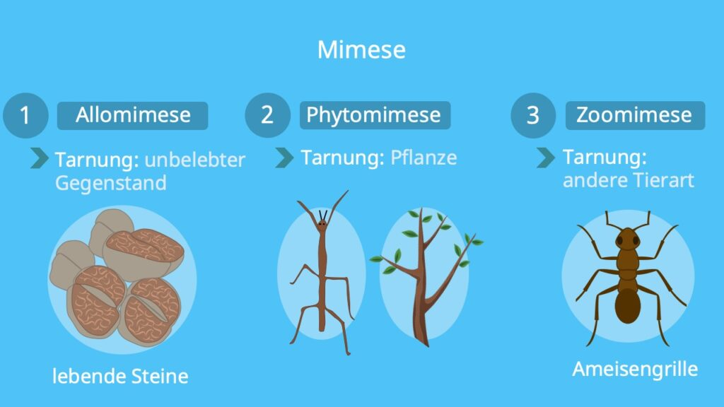 Arten, Beispiele, Allomimese, Phytomimese, Zoomimese, Tarnung, Stabheuschrecke, Lebende Steine, Ameisen