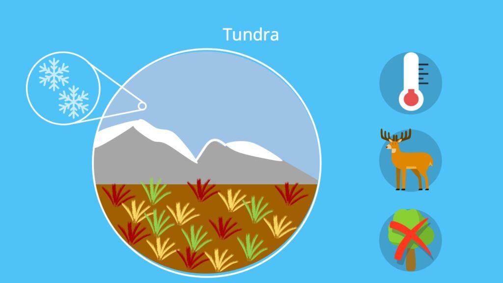 baumlose Kältesteppe, Kältesteppe, Sibirische Tundra, Alaska Russland, Tundra Taiga