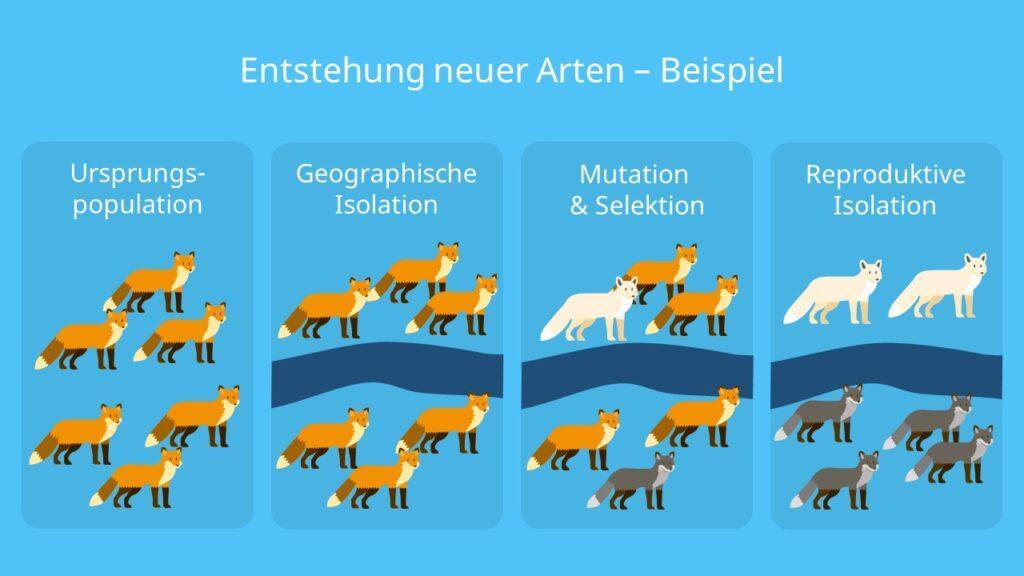 synthetische Evolutionstheorie; Evolutionsfaktoren; Darwin, Genpool, synthetische Evolutionstheorie beispiel