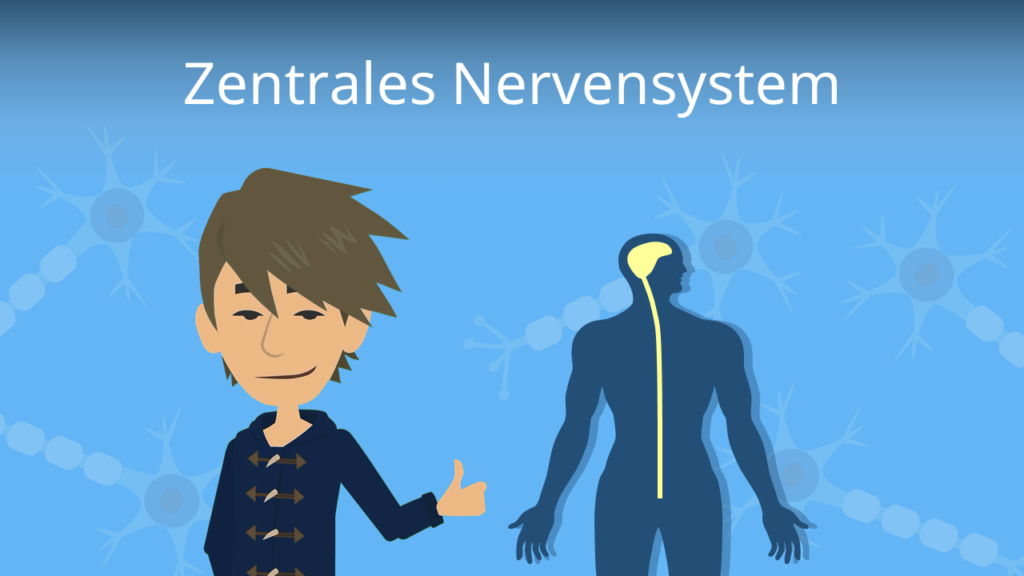 Zum Video: Zentrales Nervensystem