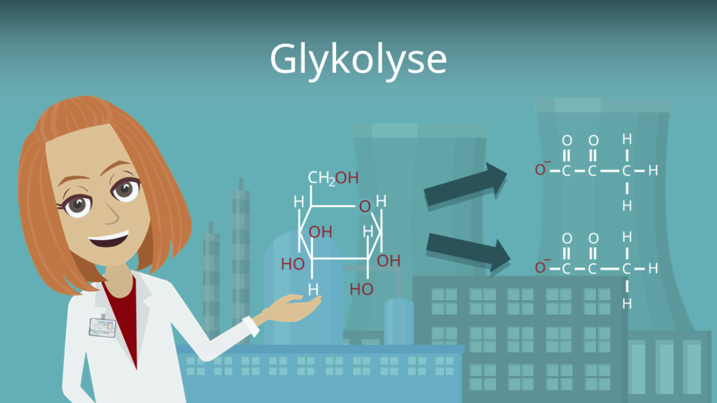 Zum Video: Glykolyse