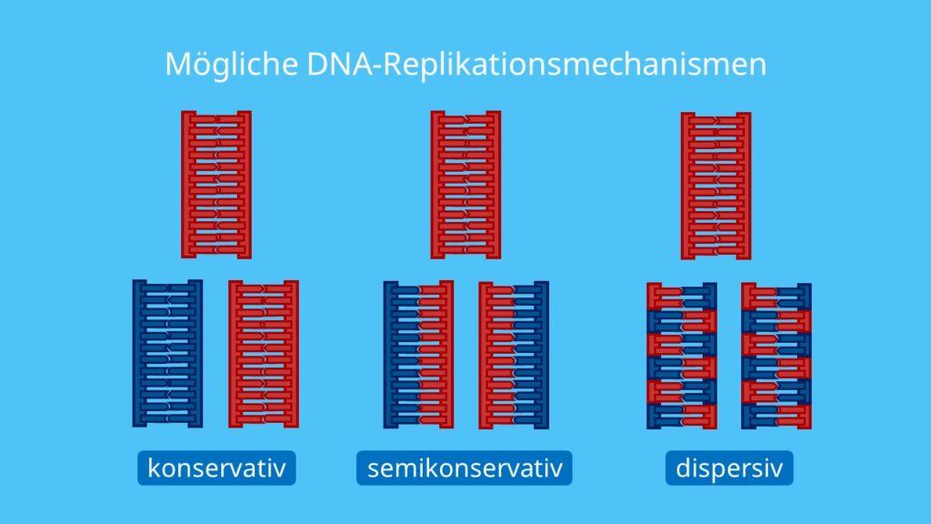 Mögliche DNA- Replikationsmechanismen, konservavtiv, semikonservativ, dispers, dispersiv