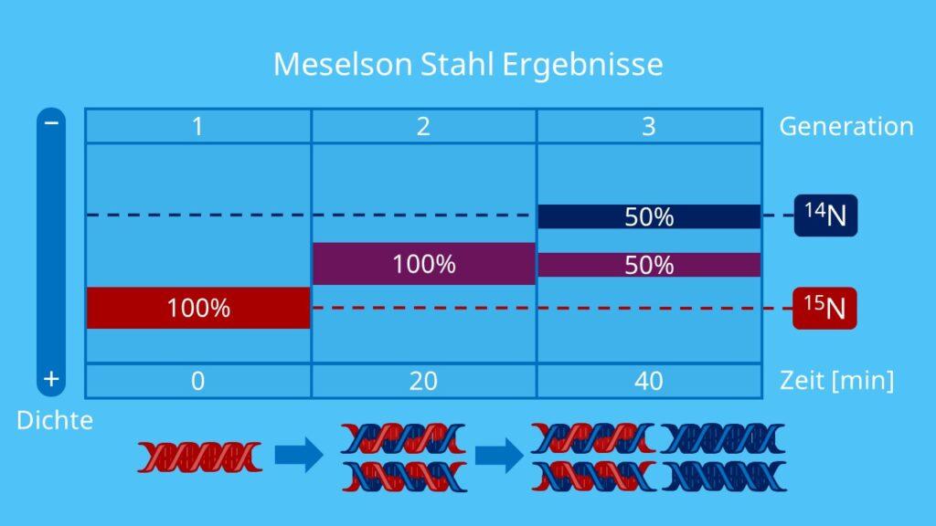 Meselson Stahl Ergebnisse, Isotopenmarkierung, Dichtegradientenzentrifugation, Stickstoffisotope, semikonservative Replikation