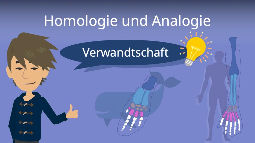 Zum Video: Homologie und Analogie