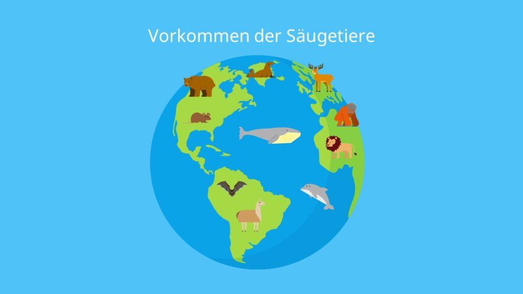 Vorkommen der Säugetiere, Säugetiere Beispiele, Säugetiere die Eier legen, Säugetiere im Wasser, Säugetiere liste