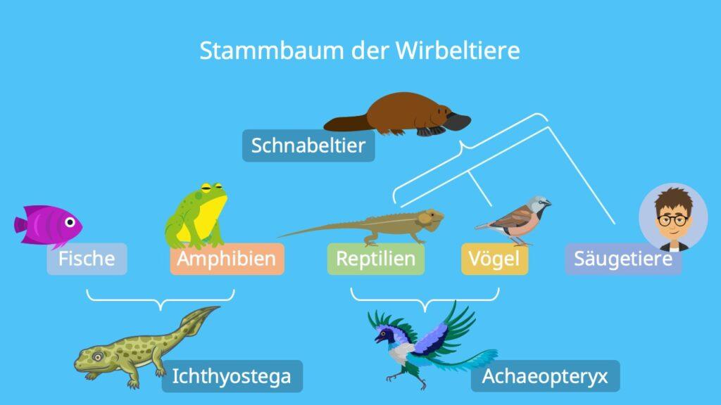 Brückentiere Beispiele, Mosaikformen, Ichthyostega, Archaeopteryx, Schabeltier, Brückentiere