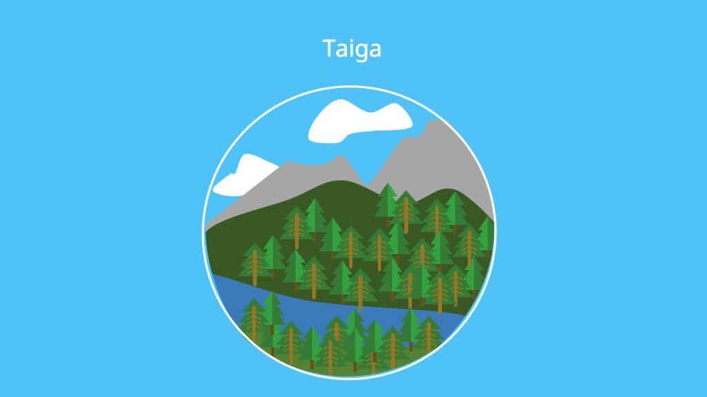 Nadelbäume, Nordhemisphäre, boreanischer Nadelwald