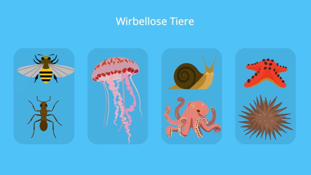 Wirbellose, Invertebraten, Insekten, Würmer, Weichtiere