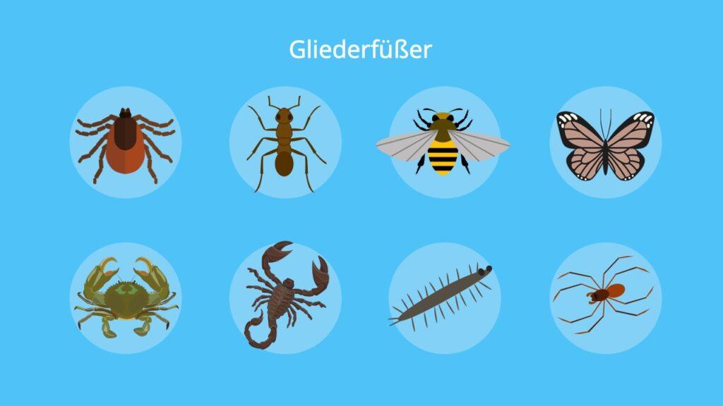 Tausendfüßer, Krebstiere, Spinnentiere