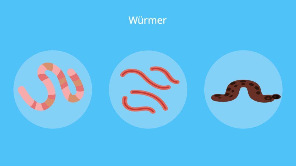 Fadenwürmer, Regenwurm, Ringelwurm, Plattwürmer