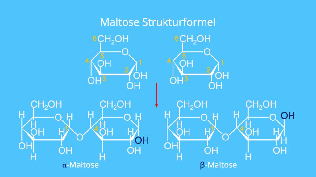 Maltose Haworth, Was ist Maltose, Maltose besteht aus, Maltose Aufbau, Malzbier Zucker, Gerstenmalz Zucker, Maltose, Glucose