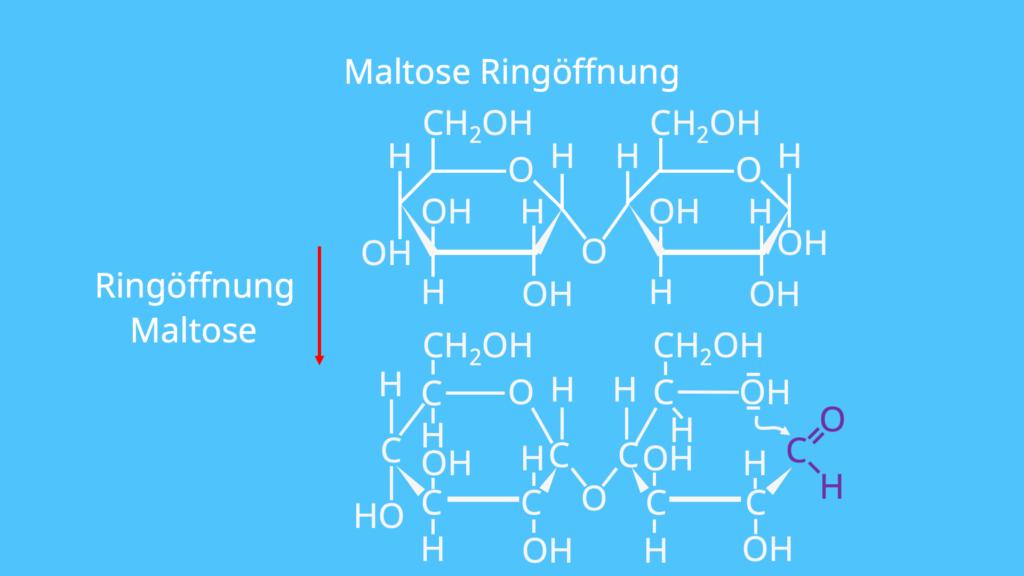 Maltose Glucose, Was ist Maltose, Maltose Strukturformel, Malzzucker, Disaccharid