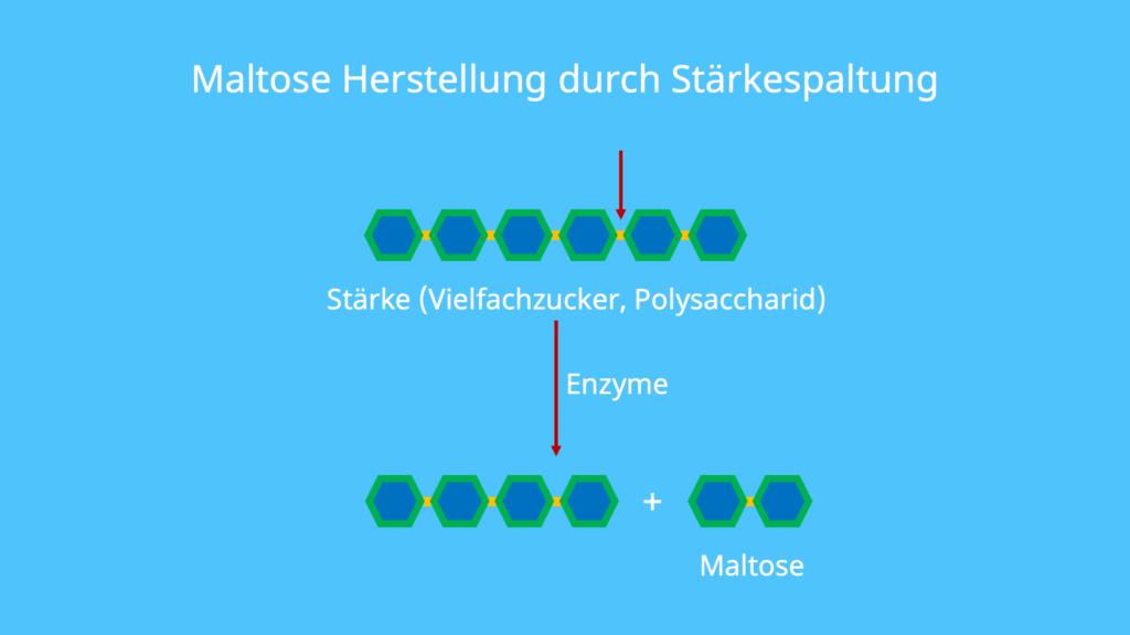 Maltose Glucose, Malzzucker, Stärke, Abbau von Stärke