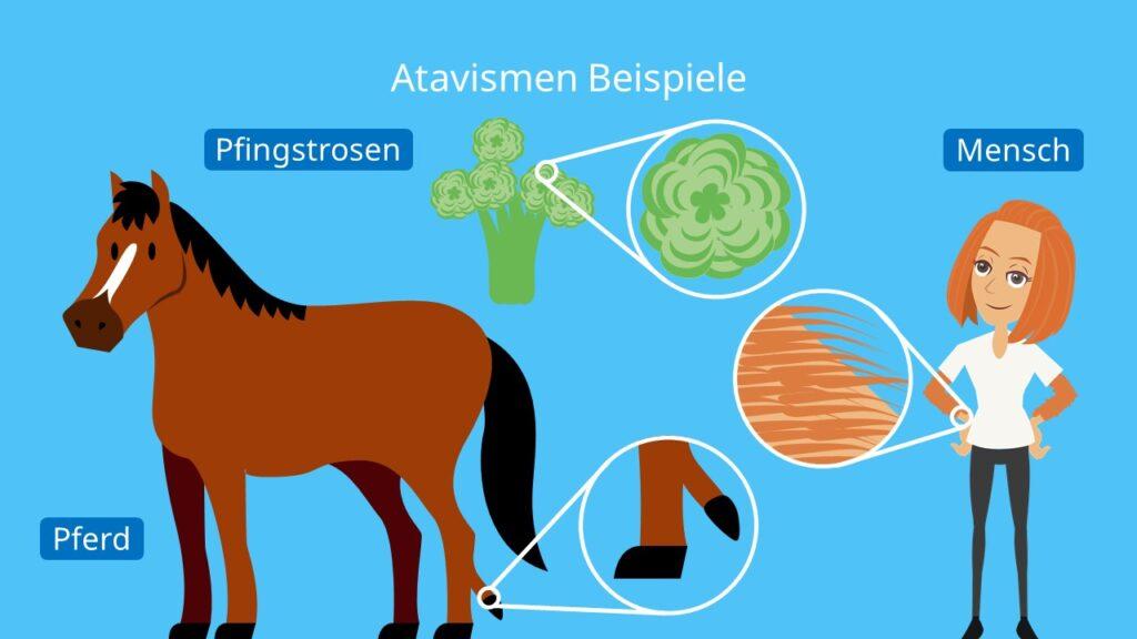 Atavismen Beispiele, Atavismus Beispiele, Atavismus Mensch, Atavismus Pferd