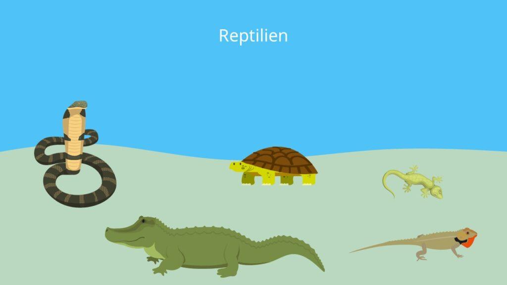 Schlangen, Schildkröten, Eidechsen, wechselwarm, Schuppentiere, Trockenlufttiere