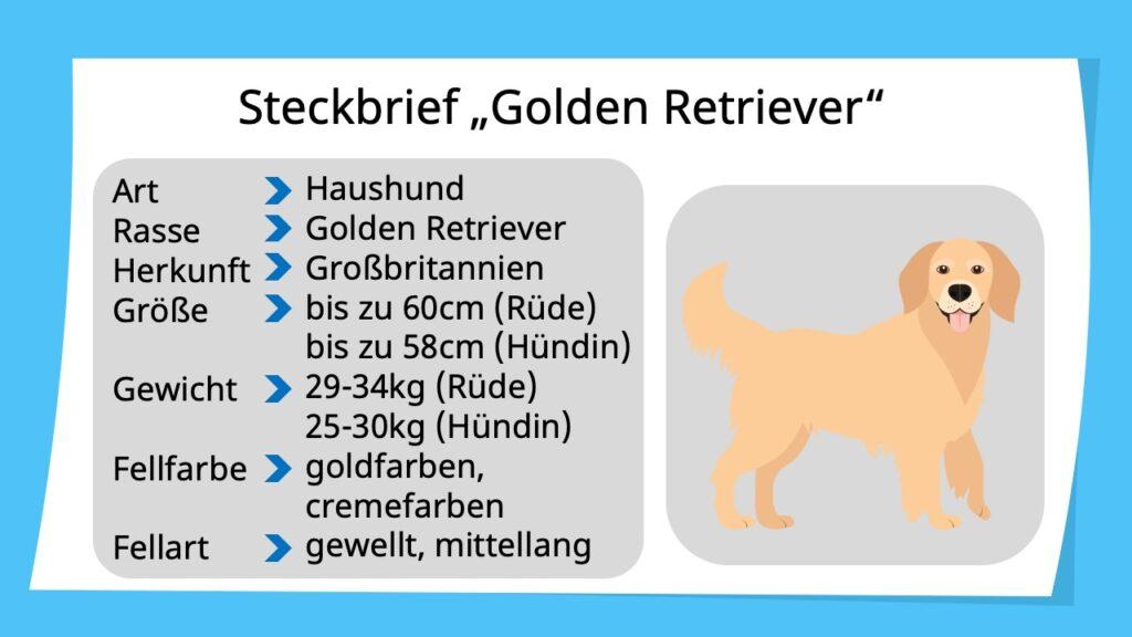 Steckbrief erstellen, Steckbrief Tiere, Steckbriefvorlage, Steckbrief Hund