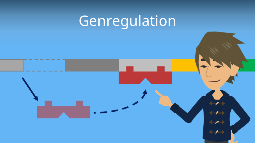 Zum Video: Genregulation