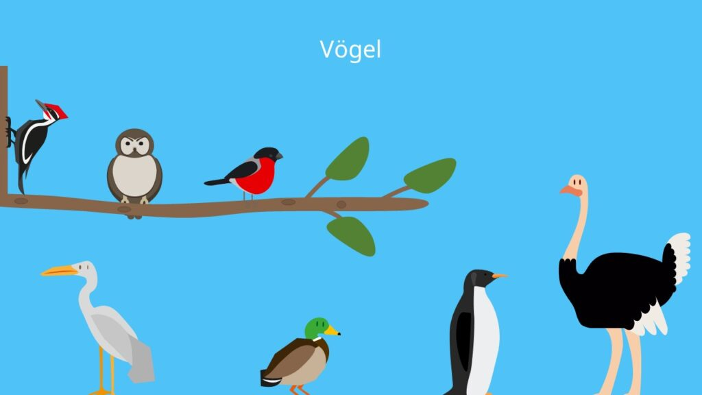 Vogel, Federn, Schnabel