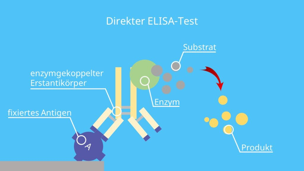 elisa test hiv, antigen, antikörper, enzym