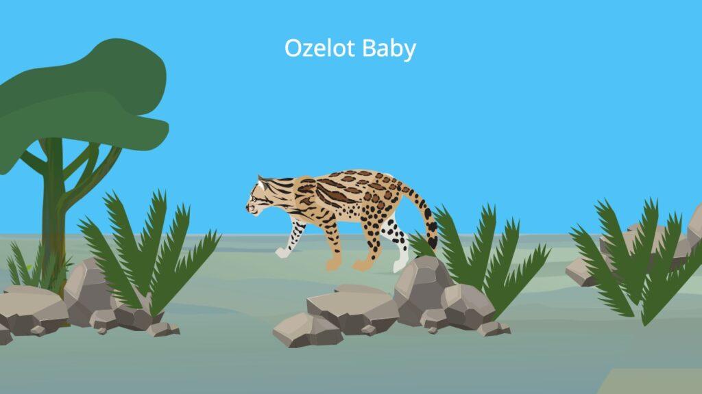 Otzelot, Ocelot, Ozelot Tier