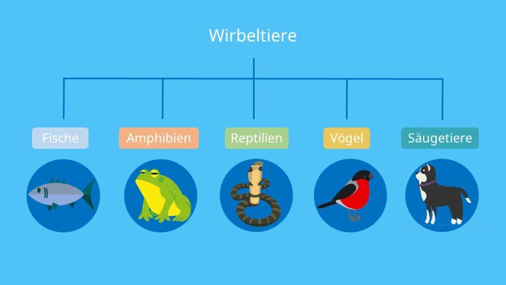 Wirbeltiere, Alt-Text: Fische, Amphibien, Vögel, Reptilien, Säugetiere