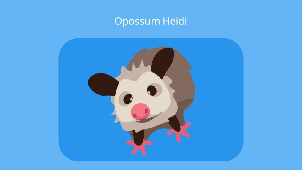 Opossums, oposum, opposum, oppossum, Beutelratte