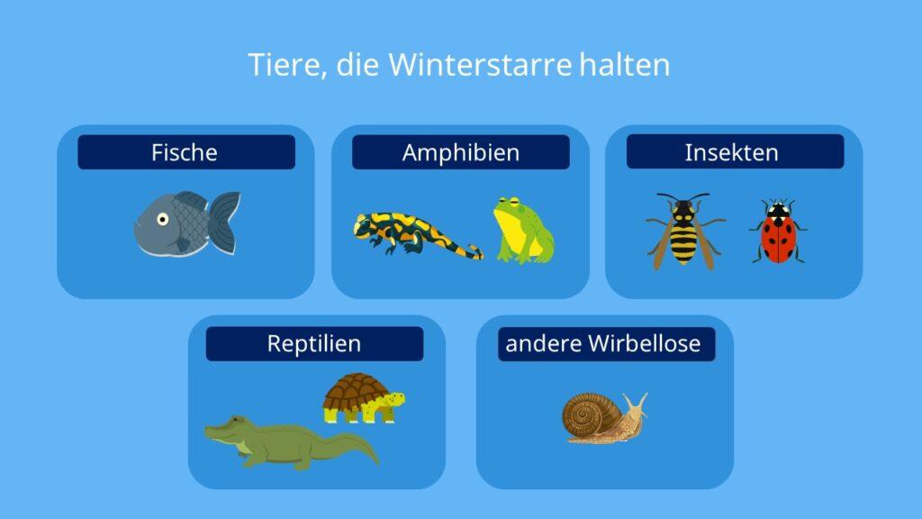 Winterstarre, Tiere, Amphibien, Reptilien, Insekten, Frosch, Schildkröte, Eidechse, Fische, Wirbellose