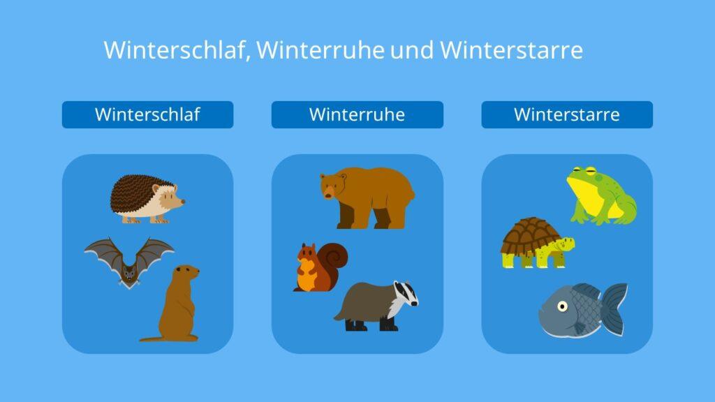 Winterschlaf, Winterruhe, Winterstarre, Fledermaus, Igel, Murmeltier, Eichhörnchen, Dachs, Braunbär, Schildkröte, Fische, Frosch