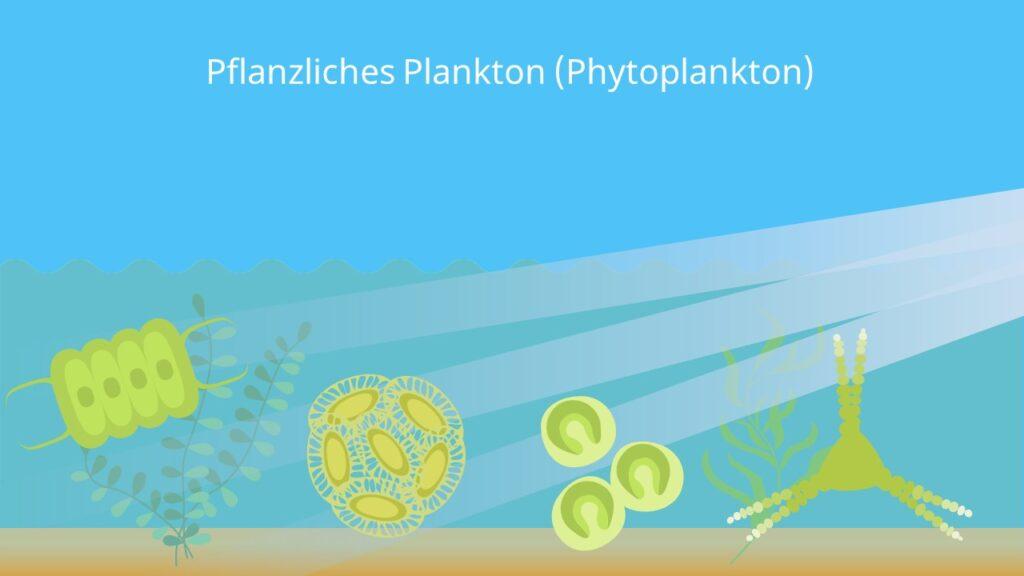 Plankton algen, pflanzliches Plankton, Phytoplankton, was ist plankton