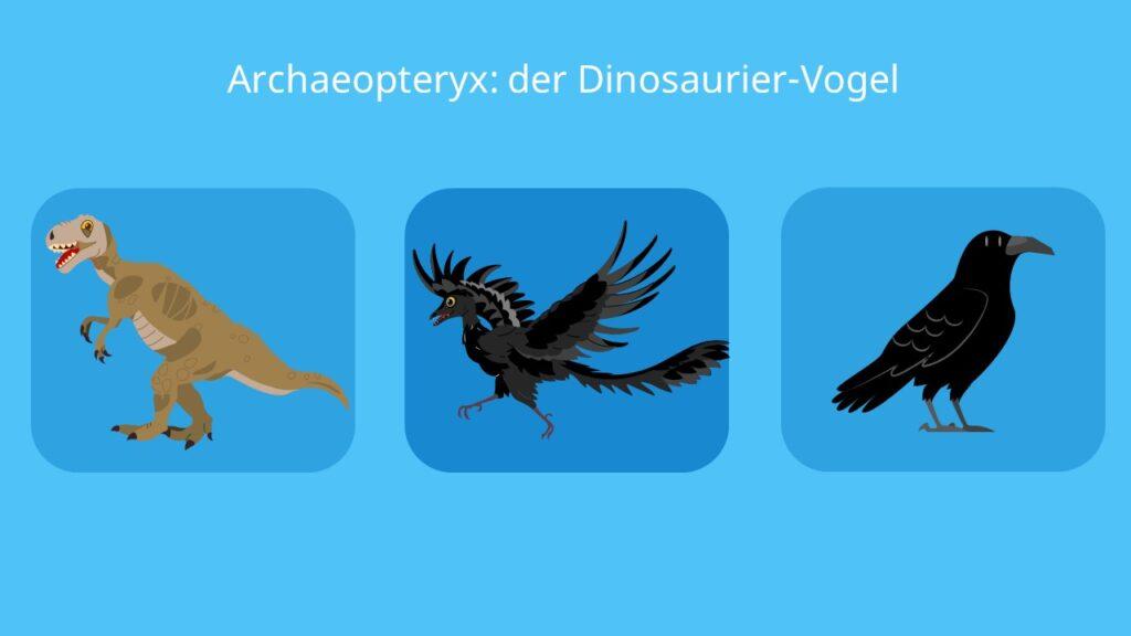 Archaeopteryx, vogelmerkmale, reptilienmerkmale, fliegen, fossil, brückentier, evolution