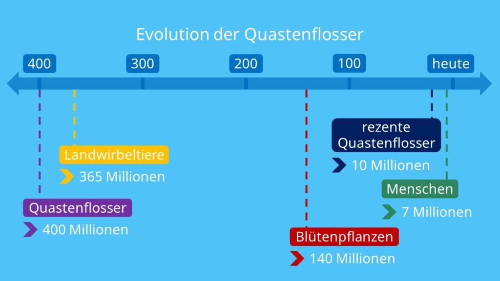 Evolution der Quastenflosser, Quastenflosser, Fossil, rezente Quastenflosser, latimeria, latimeria chalumnae