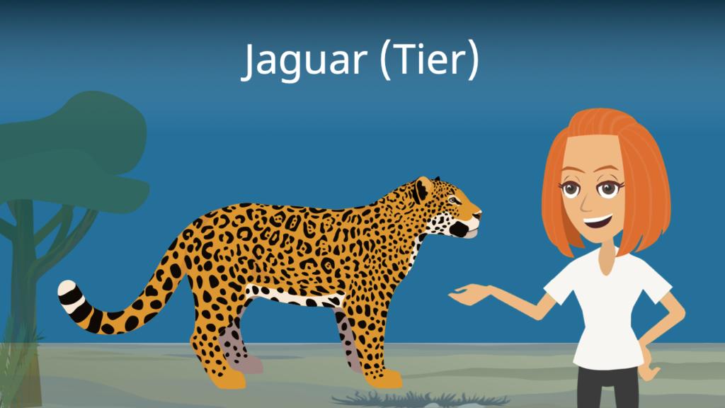 Zum Video: Jaguar (Tier)