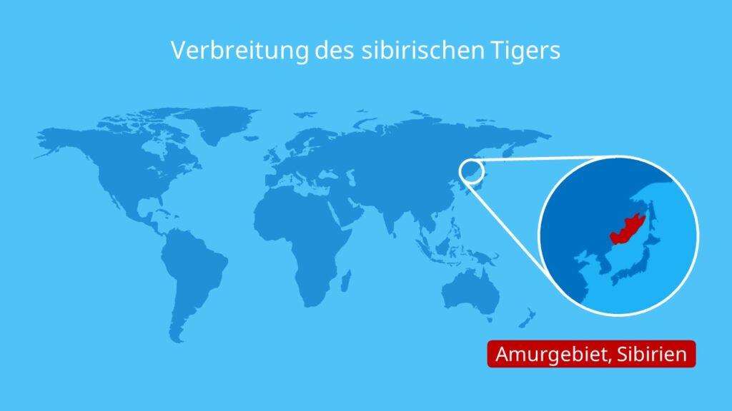 Verbreitung des sibirischen Tigers, sibirischer Tiger, Amurgebiet, Sibirien, Russland, Asien, Verbreitungsgebiet sibirischer Tiger