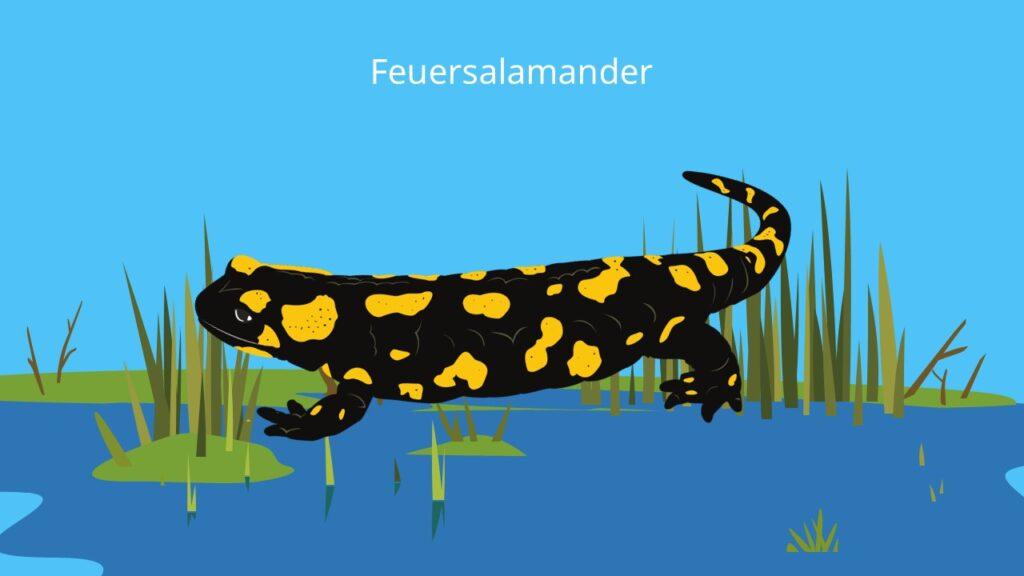 salamandra, salamander tier, salamander schwarz gelb, salamander gelb schwarz, gelb gefleckte eidechse, bilder feuersalamander