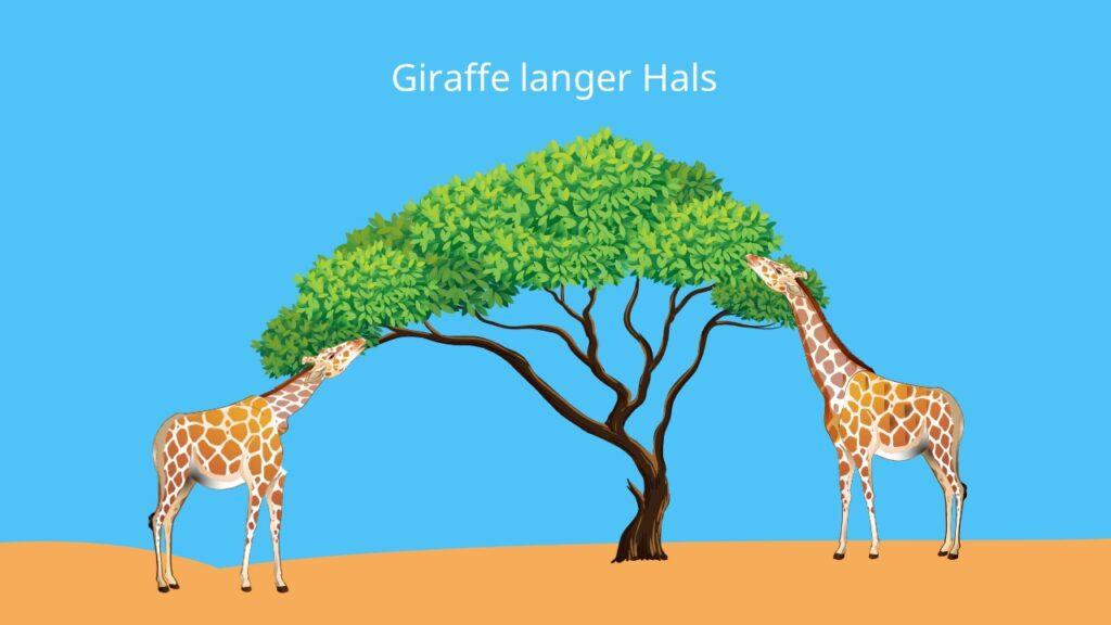 Giraffe langer Hals, kurzhälsige Giraffe, Giraffe bilder, bild, savanne