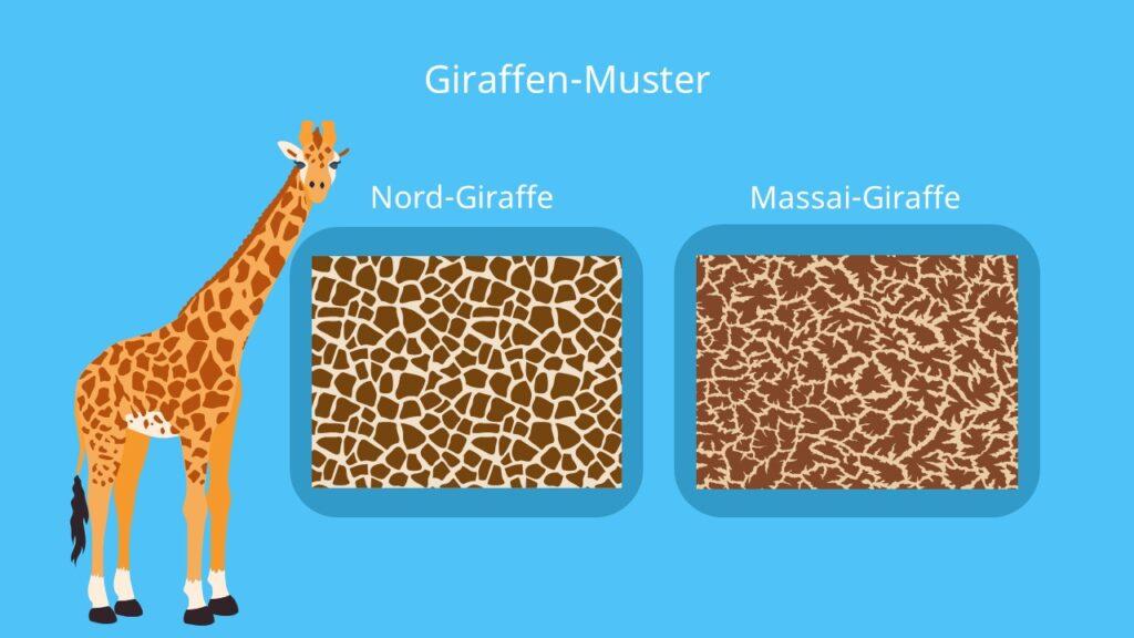 giraffe muster, giraffe bilder, savanne
