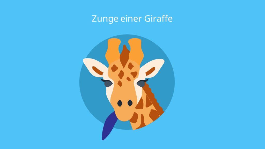 giraffe bilder, giraffe zunge, giraffa, Giraffe kopf