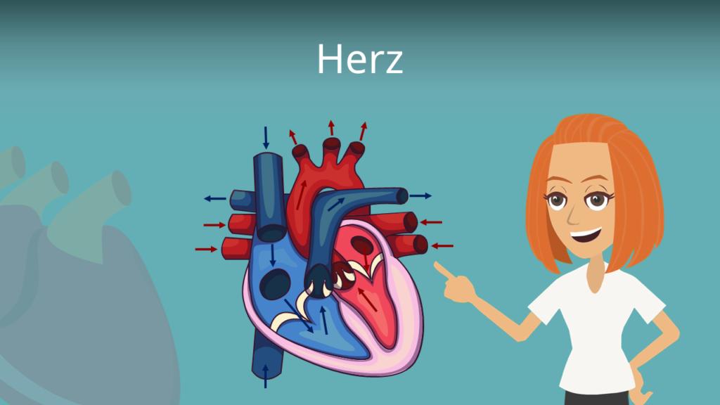 Zum Video: Herz