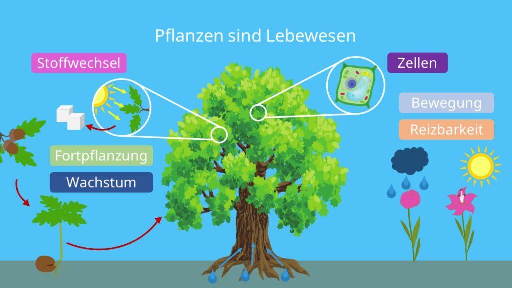 Pflanzen sind Lebewesen: Kennzeichen des Lebens, Sind Pflanzen Lebewesen?, Reizbarkeit Pflanzen