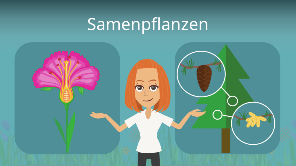 Zum Video: Samenpflanzen
