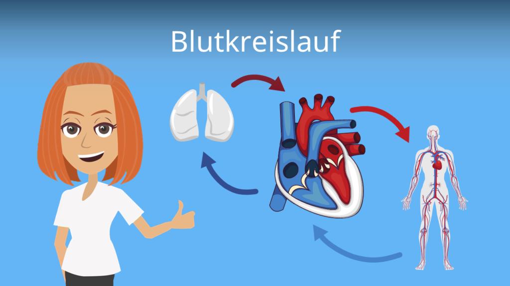 Zum Video: Blutkreislauf
