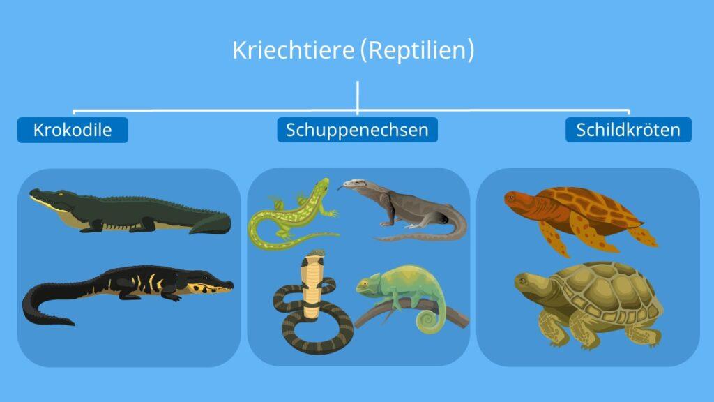 kriechtier reptil, merkmale reptilien, merkmale von reptilien, reptilien beispiele, schlange wirbeltier, welche tiere sind reptilien