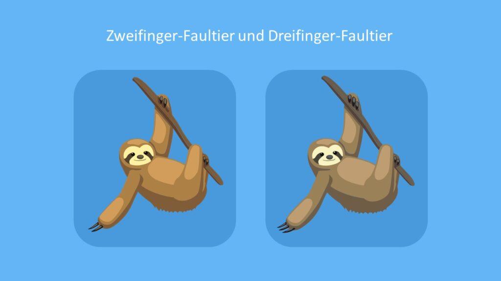 Faultierarten, Zweifinger-Faultier, Dreifinger- Faultier, Braunkehlfaultier