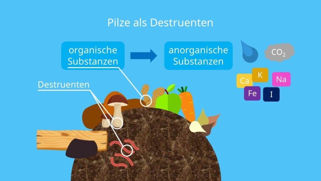 Zersetzer, Mineralisierer, organische Substanz, anorganische Substanz
